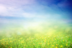 Spring sunny field Stock Photography