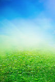 Spring sunny field Royalty Free Stock Image