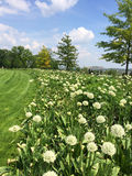 Spring sunny landscape with green meadow Royalty Free Stock Photography