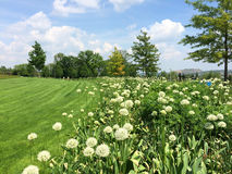 Spring sunny landscape with green meadow Stock Photography