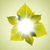 Spring sunny leafs abstract background. With place for your text Royalty Free Stock Photos