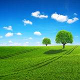 Spring sunny rural landscape. Royalty Free Stock Photos