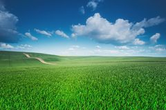 Spring sunny scene. Green fields and blue perfect sky. Spring scene. Field of grass and blue perfect sky. Vivid background Royalty Free Stock Images