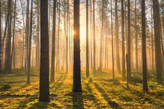 Spring sunny scene. Natural parkland with sunlight early in the morning. Stock Photography