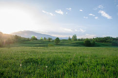 Spring. Sunrise upon a green meadow. Springtime stock image