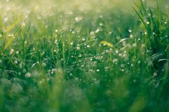 Spring sunrise and macro grass stock image