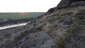 Spring sunrise over green fields. Tulip flowers on a stone hill stock footage