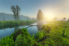 Spring sunrise over green meadow. Beautiful spring background. Royalty Free Stock Images
