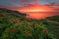 Spring sunrise with wild peonies at National Archeological Rezerve Yailata, near Kamen bryag, Bulgaria Royalty Free Stock Photos