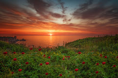 Spring sunrise with wild peonies at National Archeological Rezerve Yailata, near Kamen bryag, Bulgaria Stock Photo