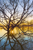 Spring sunrise. Willow flooded with spring freshet against sunrise Stock Photos