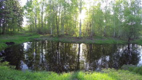 Spring sunset in birch forest and pond. Timelapse 4K stock footage