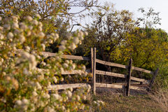 A spring sunset fence Royalty Free Stock Image