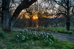 Spring sunset in forest park Royalty Free Stock Photos