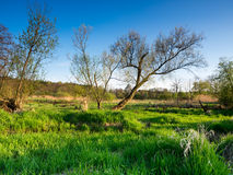 Spring sunset landscape. Spring beautiful sunset landscape in Poland Stock Photo