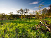 Spring sunset landscape. Spring beautiful sunset landscape in Poland Royalty Free Stock Photography