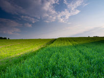 Spring sunset landscape. Spring beautiful sunset landscape in Poland Royalty Free Stock Image