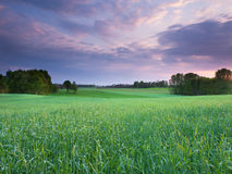 Spring sunset landscape. Spring beautiful sunset landscape in Poland Royalty Free Stock Images