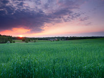Spring sunset landscape Stock Photos