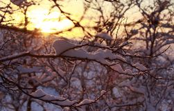 Spring sunset light across the trees, snow on forest branches. Seasonal nature beauty,landscape. Sun in sky warm colors. Spring sunset light across the trees stock photography