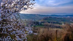 Spring sunset in the vineyards of Collio Friulano. The sun goes down in the vineyards of Friuli Venezia-Giulia royalty free stock image
