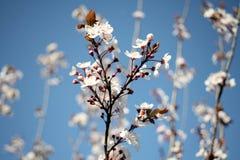 Spring sunshine Stock Photo