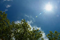 Spring sunshine and deep blue sky Stock Photography