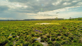 Spring in the swamp, beautiful grass in the water. Time lapse. stock footage