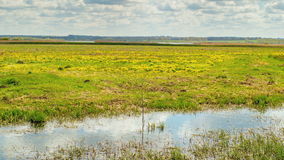 Spring in the swamp, reflection clouds in the water. Time lapse. stock footage