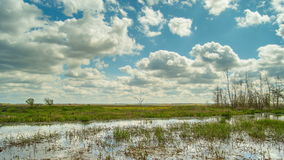 Spring in the swamp, reflection clouds in the water. Time lapse. stock video