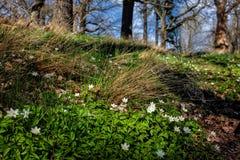 Spring in Sweden Stock Image
