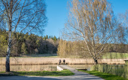 Spring in Sweden Royalty Free Stock Photography