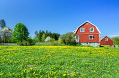 Spring on the Swedish field Royalty Free Stock Image