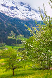 Spring in Swiss Alps Stock Images