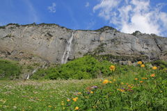 Spring in the Swiss alps, waterfall, meadow with flowers Royalty Free Stock Photography