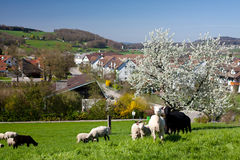 Spring in swiss village Royalty Free Stock Photos