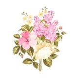 Spring syringa flowers Stock Photos