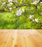 Spring table background Royalty Free Stock Photos