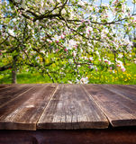 Spring table Royalty Free Stock Photography