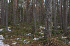 Spring in taiga Royalty Free Stock Photography