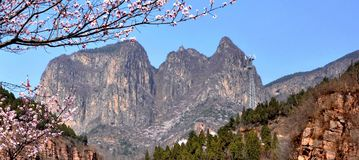The spring of the taihang mountains. Tall taihang mountains, blue sky in the peach blossom in the set off of the more beautiful and magnificent Royalty Free Stock Images