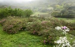 Spring taiwan Stock Image