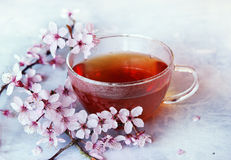 Spring tea. Cup of tea and pink cherry blossom branch on a light background Stock Photos