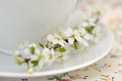 Spring Tea Time Stock Image
