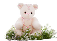 Spring teddy bear sitting on a bed of flowers Stock Images