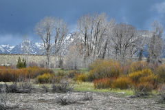 Spring In The Tetons Royalty Free Stock Photo