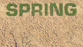 Spring text made from fresh grass among a barren land 4. Realistic 3D illustration of the fresh grass, forming the word Spring among the barren land. Was done Stock Photo