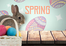 Spring text with rabbit with eggs basket in front of pattern. Digital composite of Spring text with rabbit with eggs basket in front of pattern Stock Photos