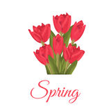 Spring text with red tulips flower bouquet. Illustration tulips beauty spring pink blossom. Nature floral holiday season background. Green leaf bloom plant Royalty Free Stock Photos