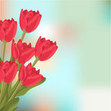 Spring text with red tulips flower bouquet. Vector illustration tulips beauty spring pink blossom. Nature floral holiday season background. Green leaf bloom Royalty Free Stock Photo